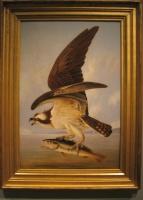 Audubon, Ern (possibly) withfish