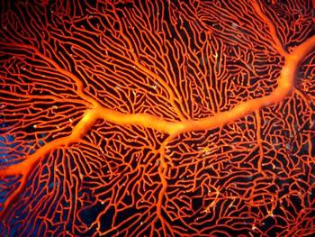 Gorgone orange (2)