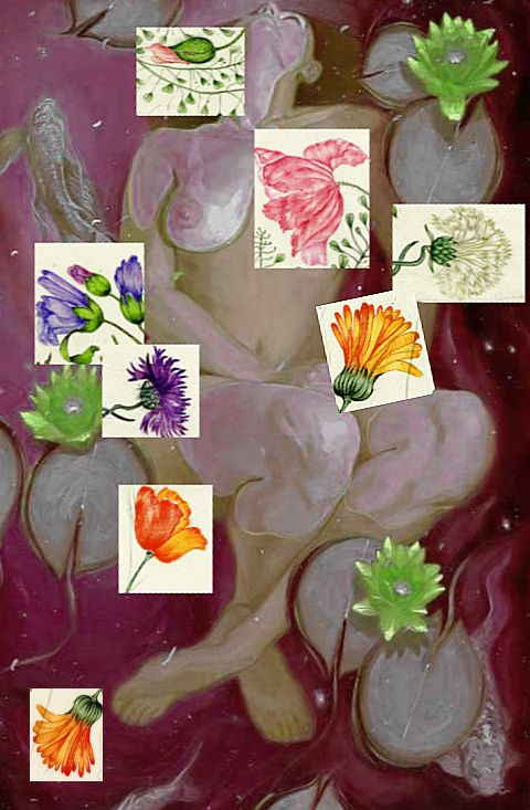 plongée  eaux  roses   nénufars  - collage  herbier