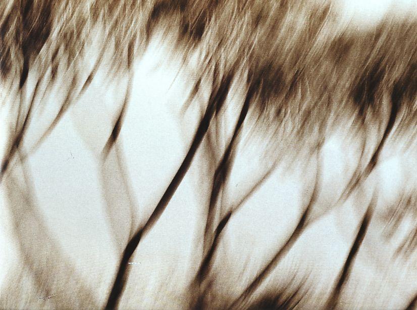 branches  floues bougé.jpg