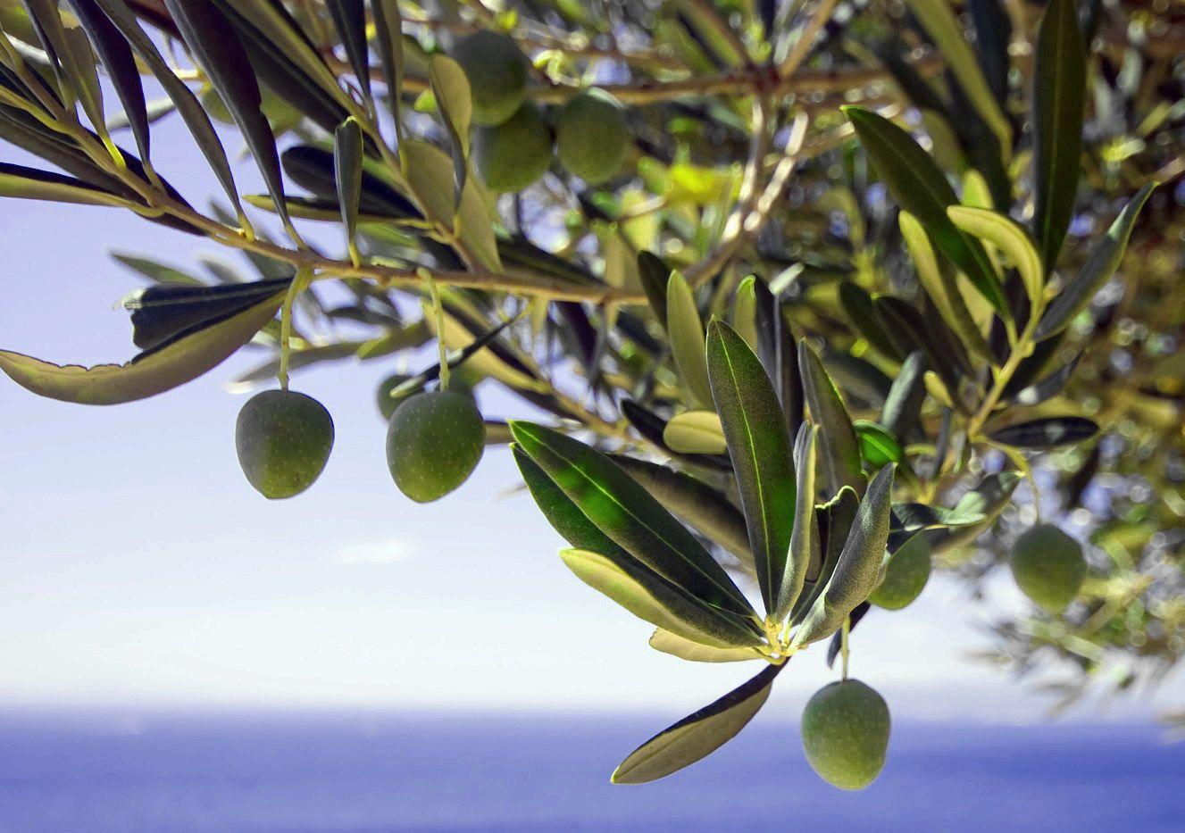oliv & sea .jpg
