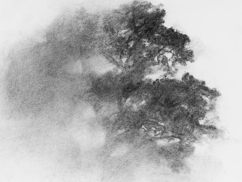 arbres vies silencieuses
