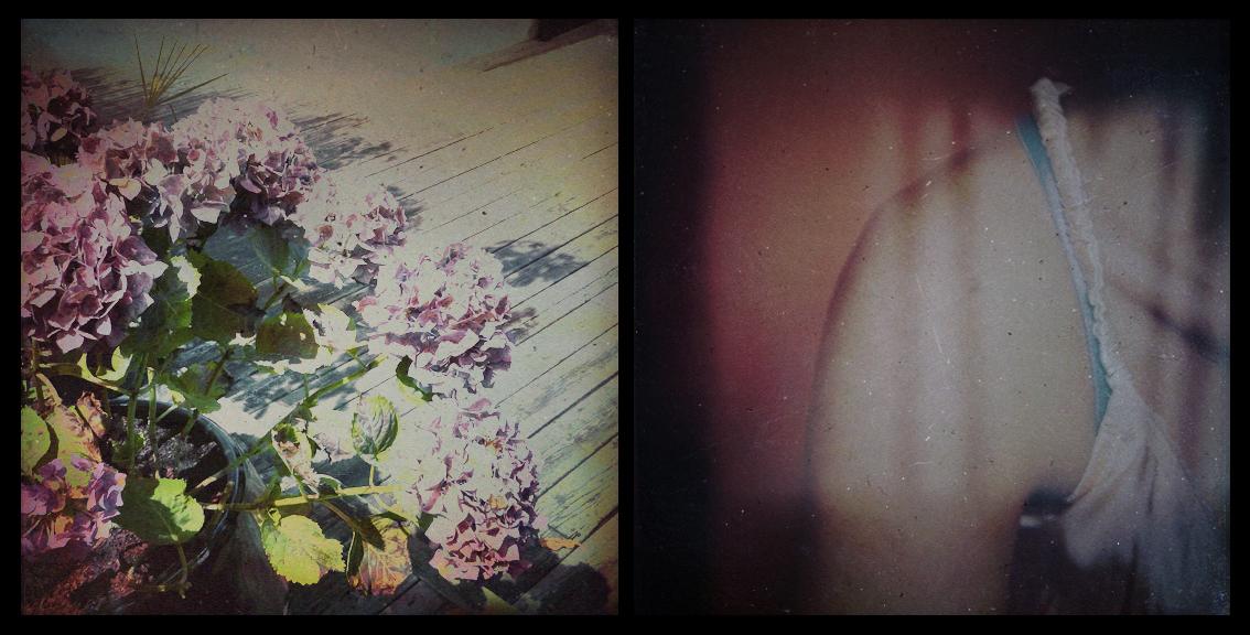 Les plantes en pot ont souvent cette élégante tristesse 15751918245.jpg