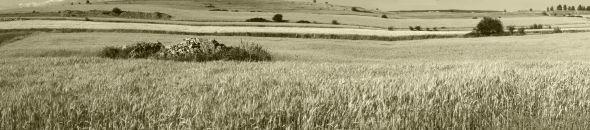 Panorama causse blés 04 sépia