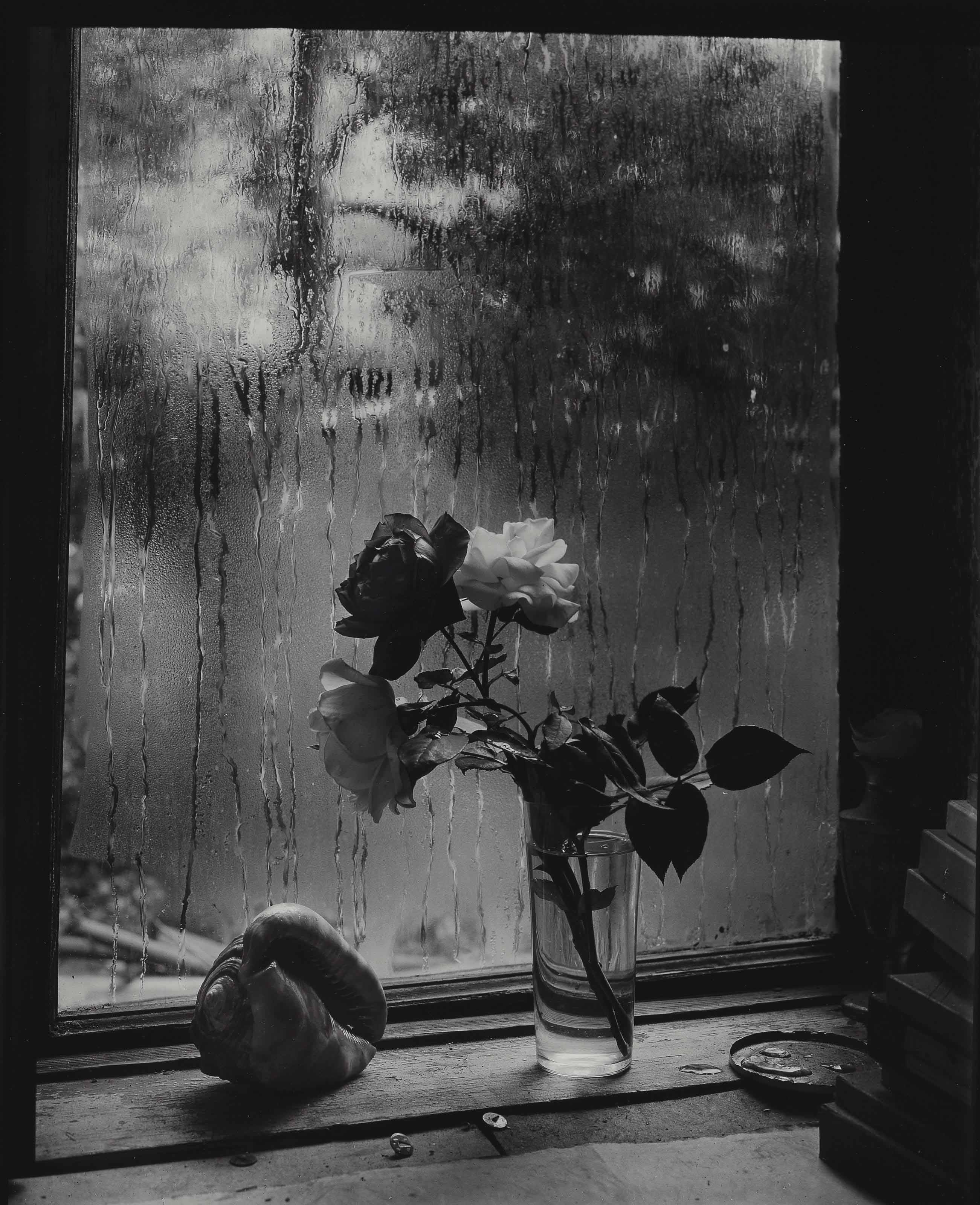 2016_NYR_12626_0166_000(josef_sudek_last_roses_from_the_series_the_window_of_my_studio_1956)