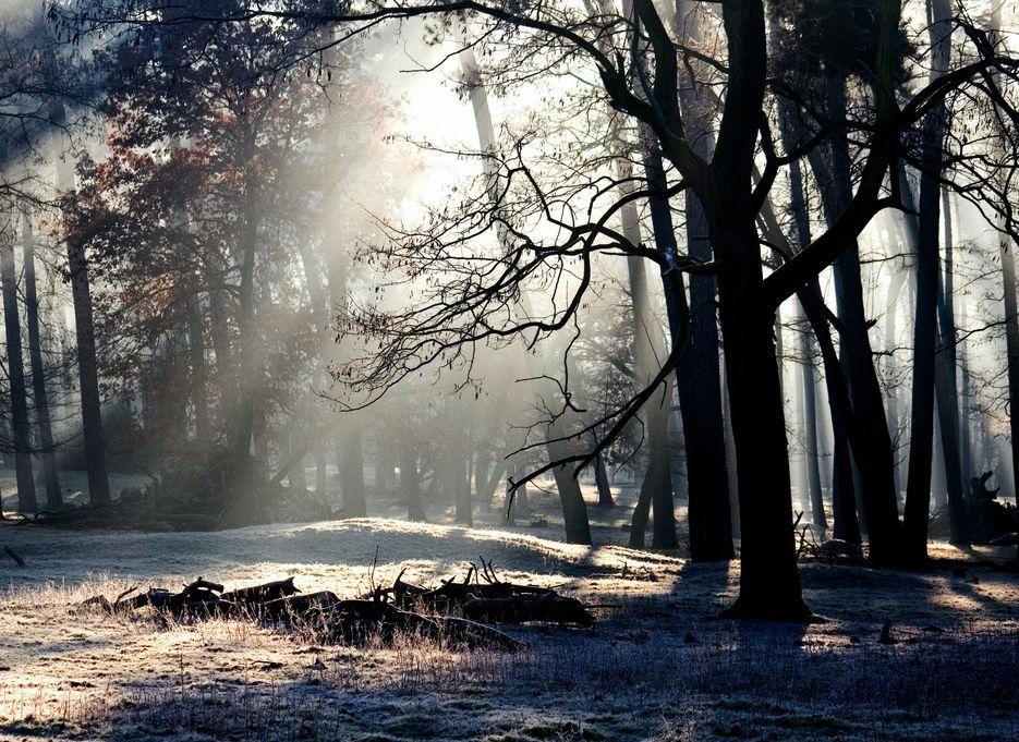 tree-nature-forest-snow-winter-light-0-pxhere.com.jpg